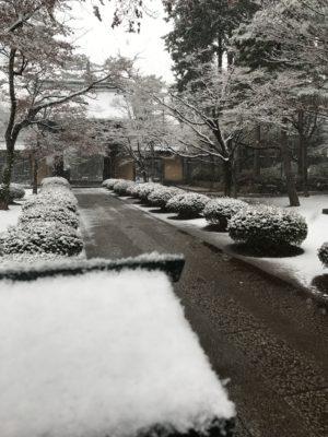 雪の豪徳寺
